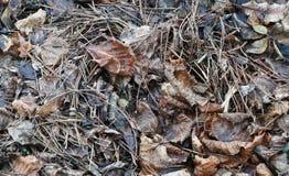 Ξηρά φύλλα στοκ εικόνες