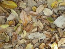 ξηρά φύλλα ανασκόπησης Στοκ Φωτογραφίες