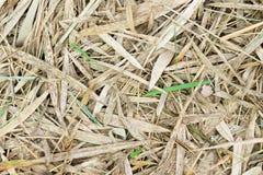 Ξηρά φύλλα μπαμπού ως υπόβαθρο Στοκ φωτογραφίες με δικαίωμα ελεύθερης χρήσης