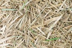 Ξηρά φύλλα μπαμπού ως υπόβαθρο Στοκ φωτογραφία με δικαίωμα ελεύθερης χρήσης