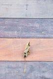 Ξηρά φύλλα που αφορούν το ξύλινο πάτωμα Στοκ φωτογραφίες με δικαίωμα ελεύθερης χρήσης