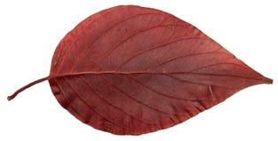 Ξηρά φύλλα πτώσης των φυτών, λουλούδια και κλάδοι, που απομονώνονται elem Στοκ Εικόνες
