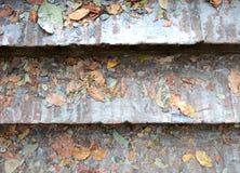 Ξηρά φύλλα στα γκρίζα βήματα τσιμέντου grunge σκαλοπάτια φραγμών υποβάθρου σύστασης Στοκ Εικόνες