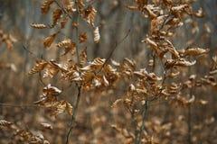 Ξηρά φύλλα στους κλάδους, δραματική κινηματογράφηση σε πρώτο πλάνο Στοκ φωτογραφίες με δικαίωμα ελεύθερης χρήσης