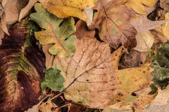 ξηρά φύλλα φθινοπώρου Στοκ φωτογραφίες με δικαίωμα ελεύθερης χρήσης