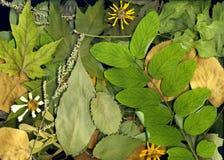 ξηρά φύλλα φθινοπώρου Στοκ Φωτογραφίες