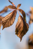 ξηρά φύλλα φθινοπώρου Στοκ φωτογραφία με δικαίωμα ελεύθερης χρήσης