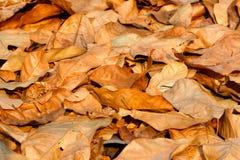 Ξηρά φύλλα, φύλλα Στοκ Φωτογραφία