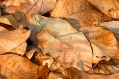 Ξηρά φύλλα, φύλλα Στοκ Εικόνες