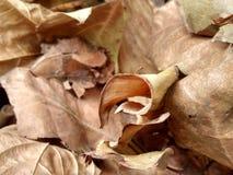 Ξηρά φύλλα στοκ φωτογραφία με δικαίωμα ελεύθερης χρήσης