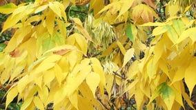 Ξηρά φύλλα απόθεμα βίντεο