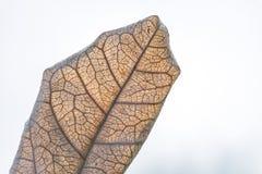Ξηρά φύλλα στοκ φωτογραφία