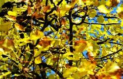Ξηρά χειμερινά φύλλα ενάντια στο μπλε ουρανό, θολωμένο φυσικό υπόβαθρο φθινοπώρου οικολογίας στοκ εικόνες με δικαίωμα ελεύθερης χρήσης