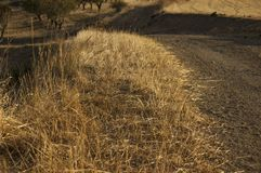 Ξηρά χλόη δίπλα στο βρώμικο δρόμο στοκ φωτογραφίες