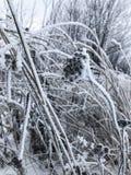 Ξηρά χλόη κάτω από μια παχιά κάλυψη χιονιού στοκ εικόνα