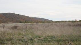 Ξηρά χλόη στον αέρα στα πλαίσια των βουνών φιλμ μικρού μήκους