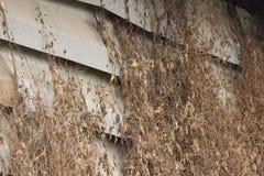 Ξηρά χλόη στον παλαιό τοίχο τσιμέντου Στοκ εικόνα με δικαίωμα ελεύθερης χρήσης