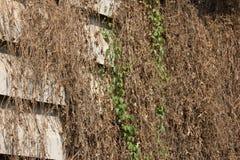 Ξηρά χλόη στον παλαιό τοίχο τσιμέντου Στοκ φωτογραφία με δικαίωμα ελεύθερης χρήσης