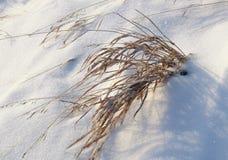 Ξηρά χλόη του Μπους snowdrift στοκ φωτογραφία με δικαίωμα ελεύθερης χρήσης