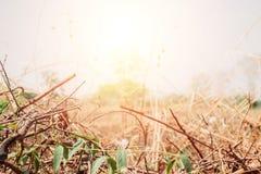 Ξηρά χλόη φύλλων και φωτεινός ήλιος στοκ εικόνες με δικαίωμα ελεύθερης χρήσης