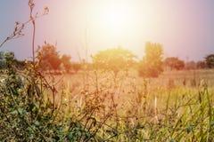 Ξηρά χλόη φύλλων και φωτεινός ήλιος στοκ εικόνα