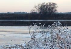 Ξηρά χορτάρια με τα άσπρα κρύσταλλα πάγου Στοκ εικόνες με δικαίωμα ελεύθερης χρήσης