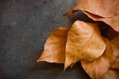 Ξηρά χρυσά φύλλα φθινοπώρου στο σκοτεινό συγκεκριμένο υπόβαθρο πετρών, σύνορα, πτώση, ημέρα των ευχαριστιών, αποκριές, αφίσα καρτ Στοκ Φωτογραφίες
