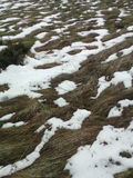 Ξηρά χλόη κάτω από το λειώνοντας υπόβαθρο χιονιού Στοκ εικόνες με δικαίωμα ελεύθερης χρήσης