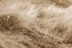 Ξηρά χλόη και ξηρά γη Στοκ Εικόνες