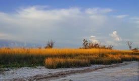 Ξηρά χλόη στην έρημο που φωτίζεται από τον ήλιο ρύθμισης Στοκ Εικόνα