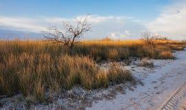 Ξηρά χλόη στην έρημο που φωτίζεται με τη ρύθμιση του ήλιου Στοκ εικόνες με δικαίωμα ελεύθερης χρήσης