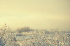 Ξηρά χλόη στον παγετό του στις αρχές χειμερινού πρωινού στον τομέα στην ομίχλη Στοκ Εικόνες
