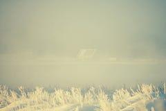 Ξηρά χλόη στον παγετό του χειμώνα στον τομέα στο τοπίο ομίχλης στα ξημερώματα πριν από την αυγή Στοκ φωτογραφία με δικαίωμα ελεύθερης χρήσης