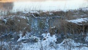 Ξηρά χλόη στο παγωμένο τοπίο φύσης ποταμών νερού χιονιού πάγος φιλμ μικρού μήκους
