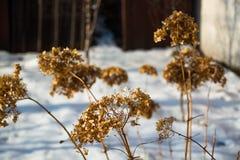 Ξηρά χλόη το χειμώνα Στοκ εικόνα με δικαίωμα ελεύθερης χρήσης