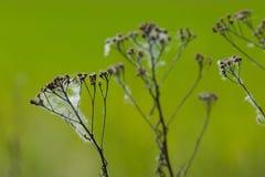 ξηρά χλόη Στοκ φωτογραφία με δικαίωμα ελεύθερης χρήσης