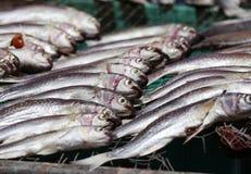 ξηρά ψάρια Στοκ Φωτογραφίες