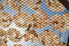 Ξηρά ψάρια 11 Στοκ εικόνα με δικαίωμα ελεύθερης χρήσης