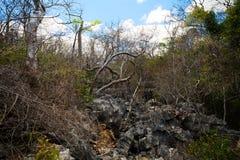 Ξηρά δύσκολη δασική επιφύλαξη σε Ankarana, αγριότητα της Μαδαγασκάρης Στοκ Φωτογραφίες
