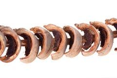 Ξηρά areca καρύδια για το μάσημα του πρόχειρου φαγητού Στοκ εικόνες με δικαίωμα ελεύθερης χρήσης