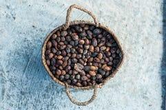 Ξηρά argan φρούτα Στοκ Εικόνες