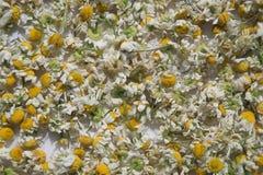 Ξηρά chamomile λουλούδια για το τσάι Στοκ φωτογραφία με δικαίωμα ελεύθερης χρήσης