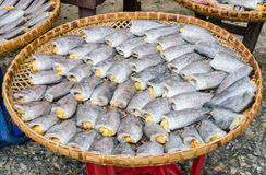 Ξηρά fishs των τοπικών τροφίμων Στοκ Εικόνα