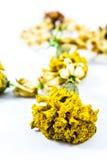 Ξηρά jasmine κινηματογραφήσεων σε πρώτο πλάνο γιρλάντα με τα λουλούδια calendula Στοκ Εικόνα