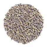 Ξηρά lavender άνθη, κύκλος χορταριών άνωθεν, πέρα από το λευκό στοκ εικόνα
