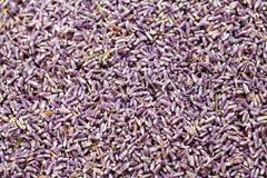 ξηρά lavenders ανασκόπησης Στοκ Εικόνα