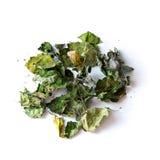 Ξηρά patchouli φύλλα στο λευκό στοκ εικόνες