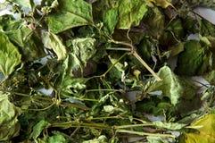 Ξηρά patchouli φύλλα στοκ φωτογραφίες με δικαίωμα ελεύθερης χρήσης