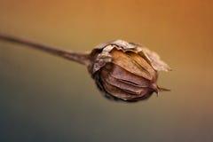 Ξηρές ακτίνες λουλουδιών στον ήλιο στο λιβάδι Στοκ Εικόνα