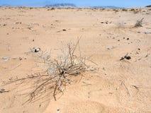 Ξηρές εγκαταστάσεις στην έρημο ρουμιού Wadi στοκ φωτογραφία με δικαίωμα ελεύθερης χρήσης
